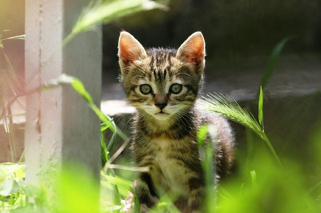 Cat food, cats, kitten