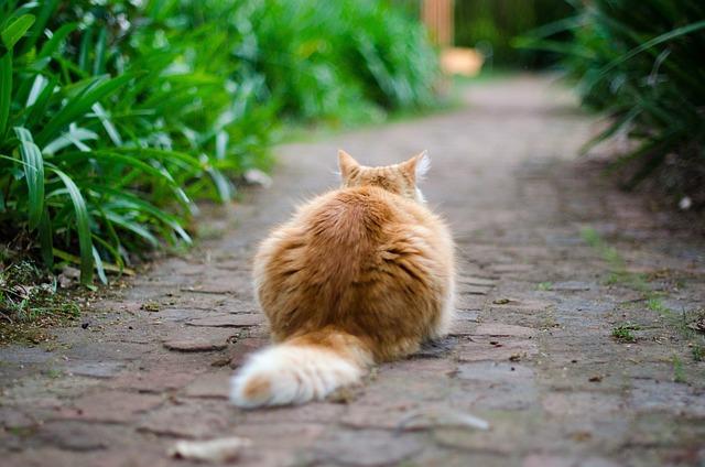 Cat outside