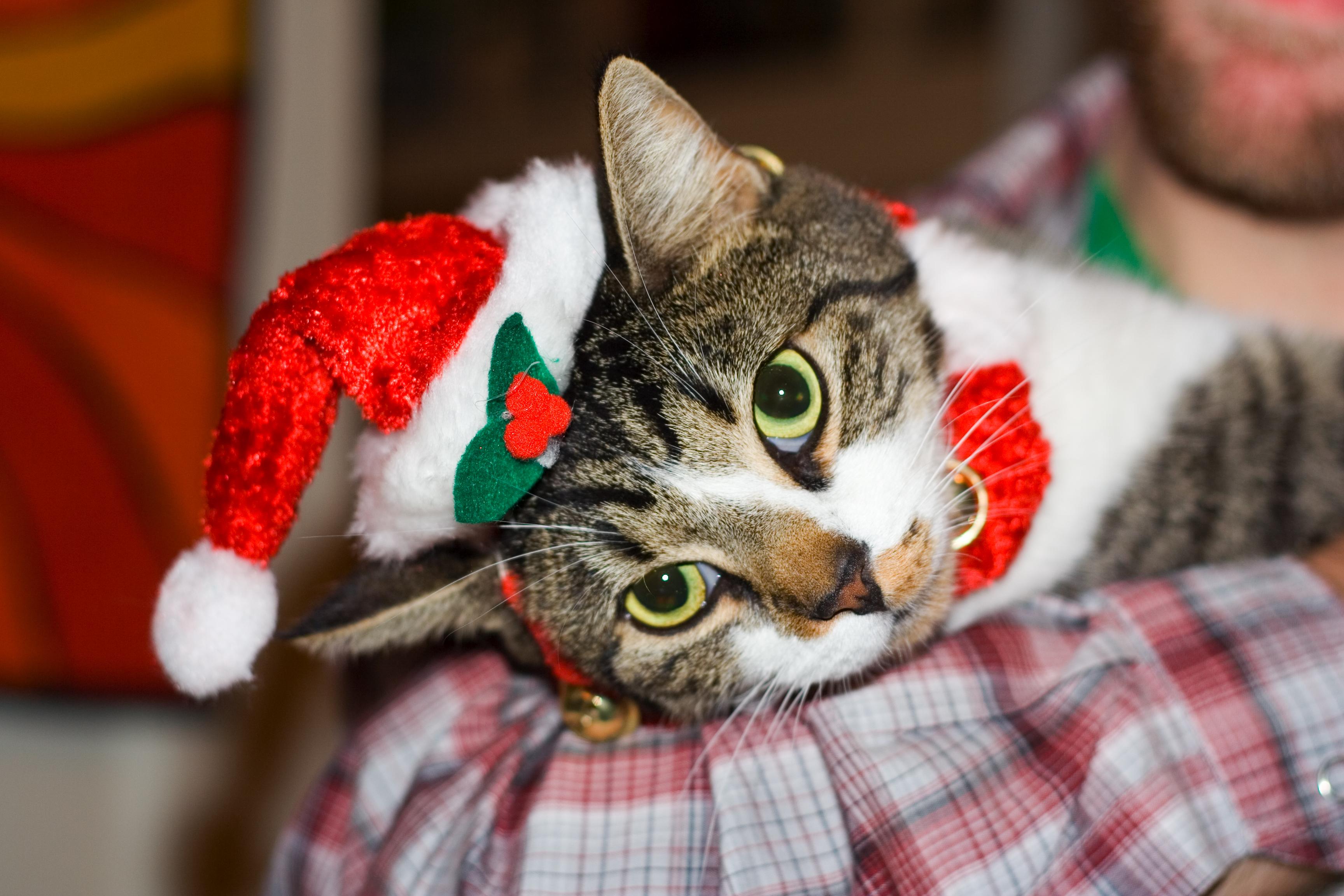 Christmas Kitty Cat