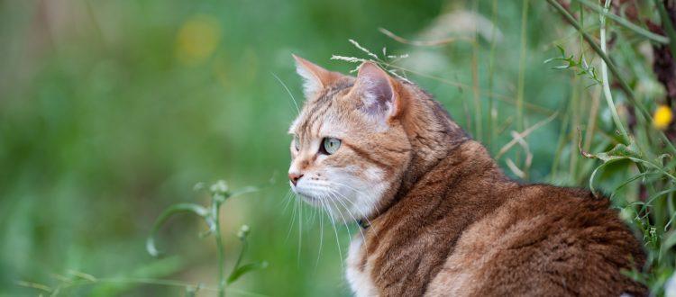 cat going outside