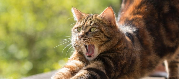 Kitty Anxiety: How To De-Stress Cats