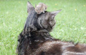 Cat mouse cat food