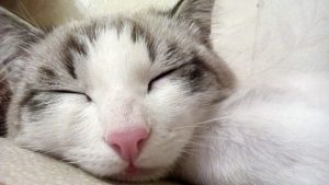 Sleeping Cat wellness