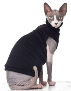 Sphynx - Exotic cat breeds