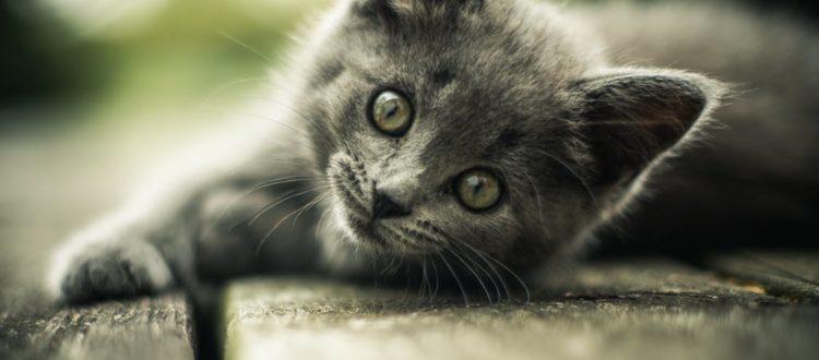 kittens - Pregnant Cat