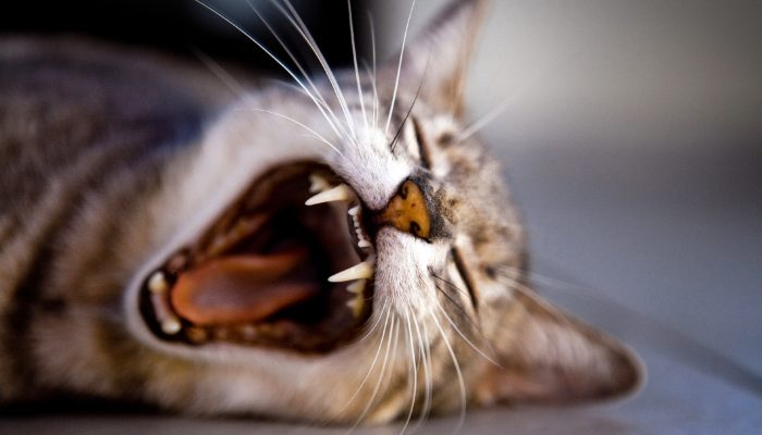 All You Need to Know about Kitten Teething