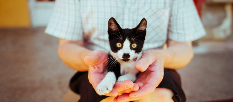 Photo by Anton Darius | Sollers on Unsplash Top Trends in Pet Ownership and Care